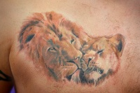 Colorful lion tenderness tattoo on chest